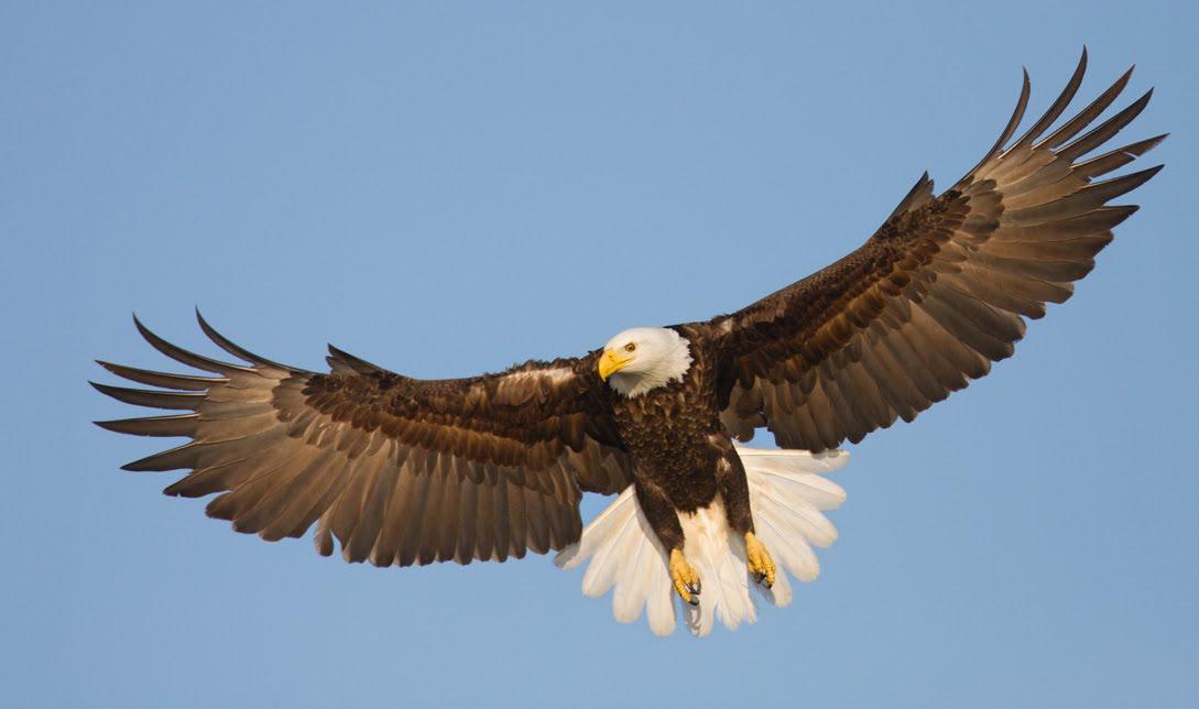 Eagle of Dan