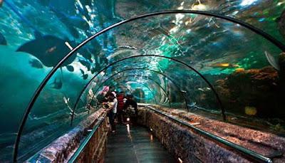 Sea World, Jakarta
