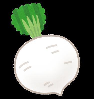 聖護院大根のイラスト(京野菜)