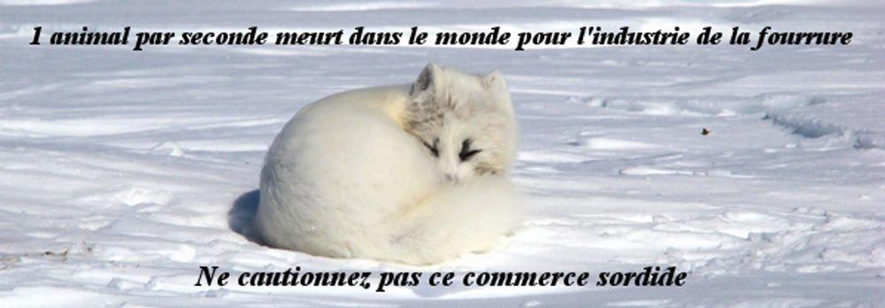 Anti fourrure prochain rassemblement 22 Mars Paris 1er Arrond. Copie%2Bde%2Bpierre%2B2