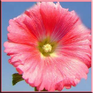kök yaprak çiçek sağlık bakım fayda zarar sindirim sistemi idrar safra kalp böbrek