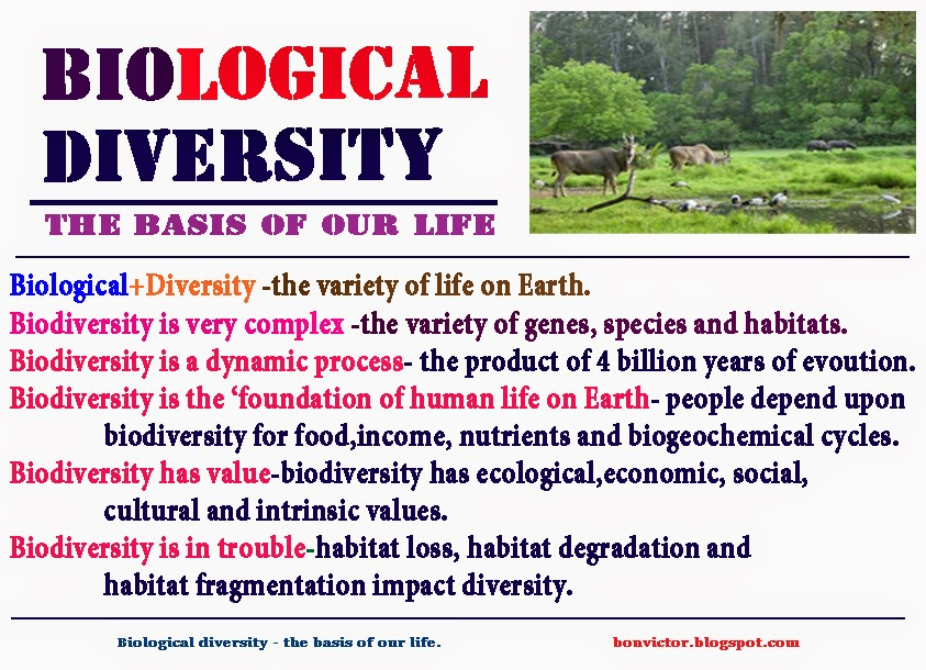 importance of understanding biological basis of behaviour But, bartz cautioned, nuance is important when it comes to understanding the social effects of oxytocin in a 2010 issue of proceedings of the national academy of sciences, for instance,   biological bases of social behavior published july 13, 2013 leave a comment cancel reply.