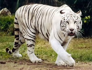 15 animales extintos en los últimos 250 años – Marcianos - imagenes de animales de extincion
