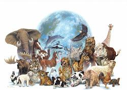 Estos son algunos de los animales que forman este mundo.