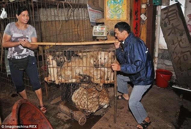 festival de la carne del perro en China