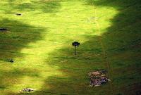 Amazônia perde área maior que São Paulo em 6 meses, aponta Inpe