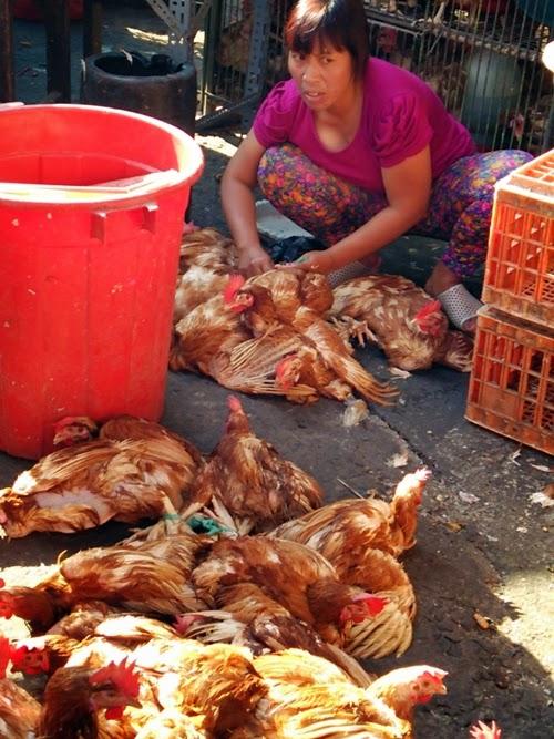 バリの市場で鶏を売る女性