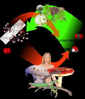 Makhluk hidup heterotrof adalah
