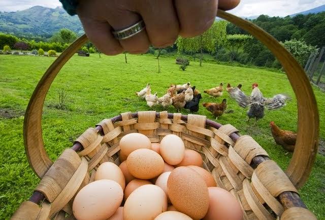 Huevos Ecológicos 0E