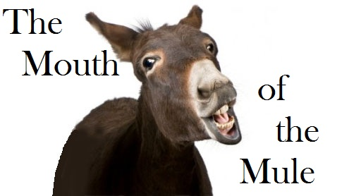 The Mouth O' The Mule