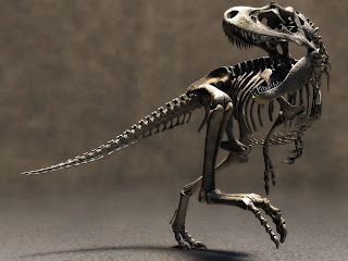 Dinosaur Skeleton HD Wallpaper