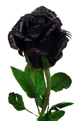Black Rose Photos