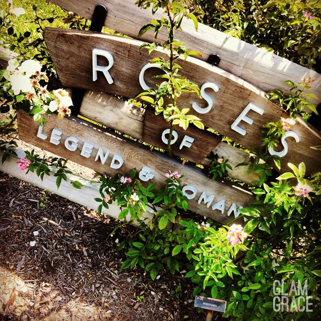 Roses of Legend & Romance - OARDC Wooster