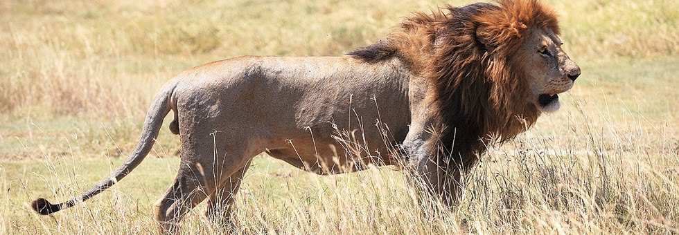 Kenya Tanzania Safaris, Tours, Holiday Trips, Masai Mara Serengeti