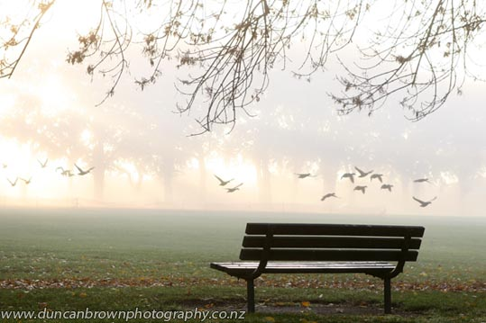 Ducks at dawn photograph