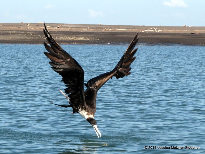 Paracas National Reserve Tour