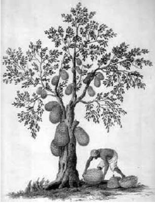Tips Menggambar Pohon: