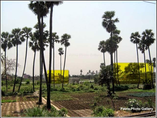 Kamaldah Jain Temple Complex Patna