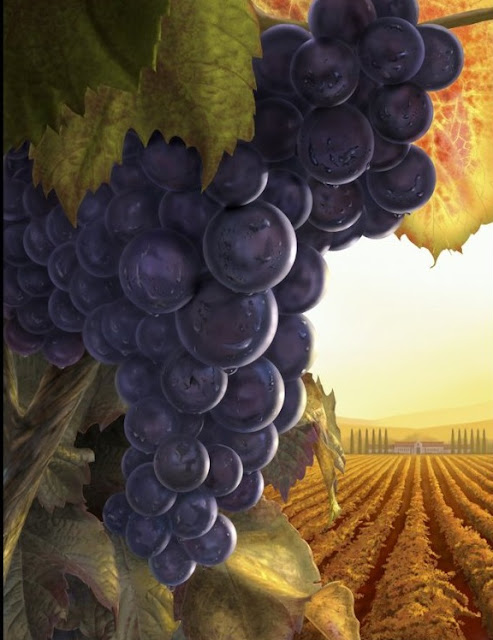 digital art grapes,digital art fruits,digital art landscape
