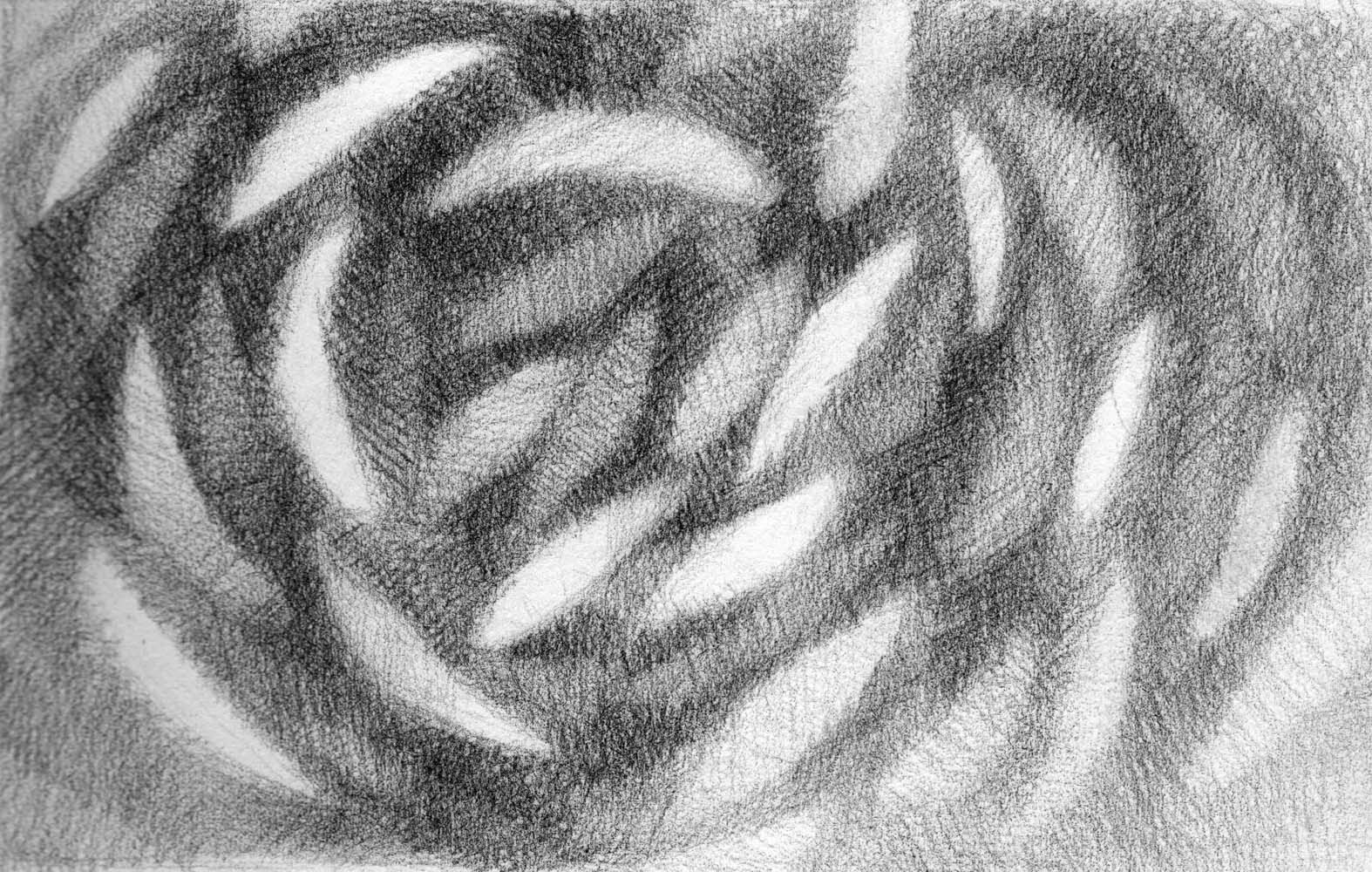 abstract pencil drawing leaves fish artist janine aykens