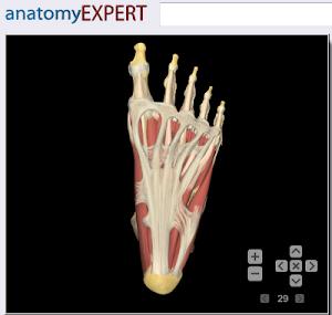 anatomy expert