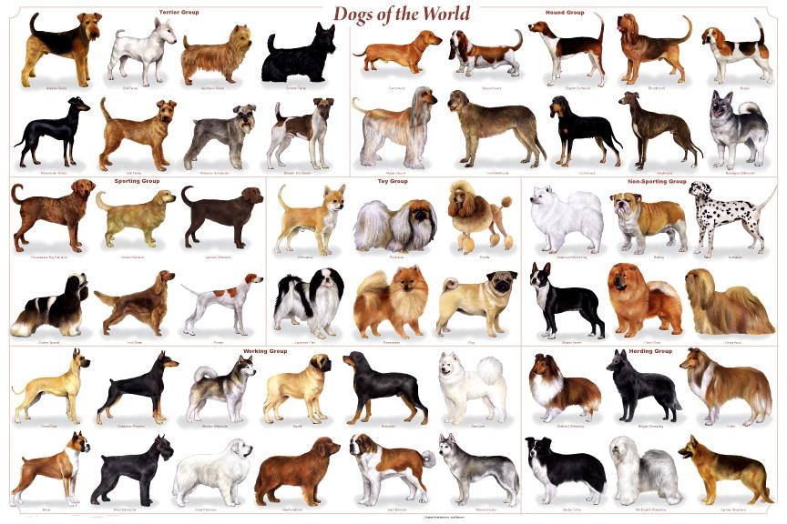 Estructura genética de los perros domésticos de pura raza.