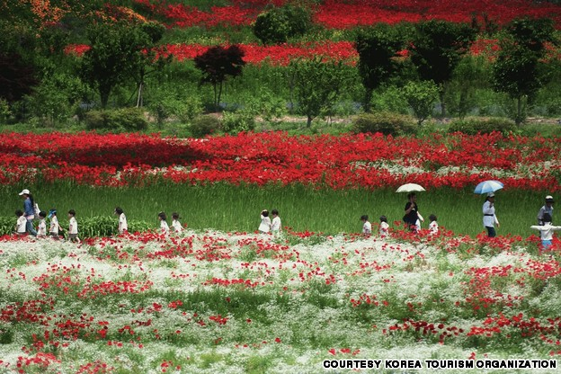 Poppy Garden, Simhak Mountain, Paju (파주 심학산 꽃밭)
