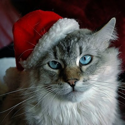 Funny Christmas Animal 2012