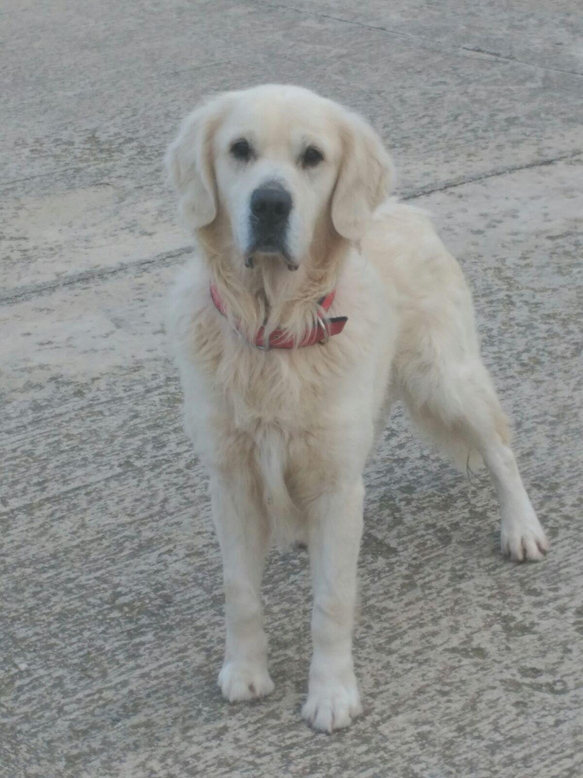 Protectora d 39 animals lydia argil s blanc urge un nuevo for Banc sabadell pisos