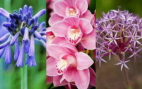 Flower Bulbs That unfold For a colourful Garden