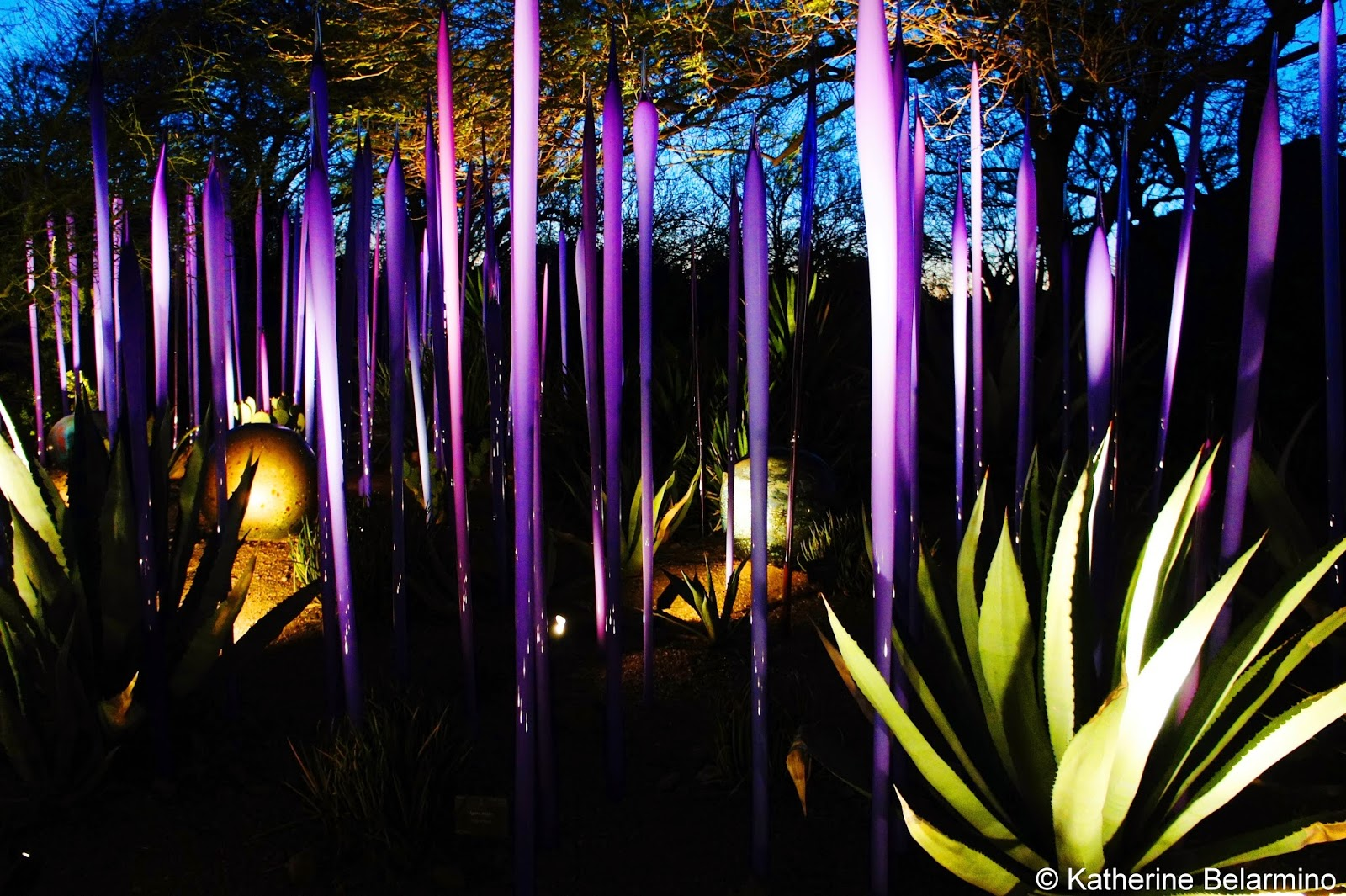 Dale Chihuly Neodymium Reeds and Black Niijima Floats Desert Botanical Garden Phoenix Arizona