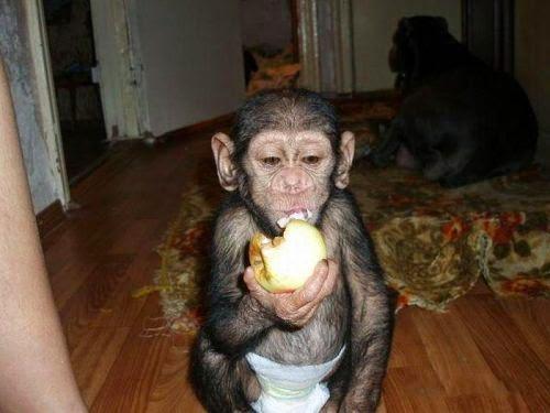chimpance es adoptado por una perra