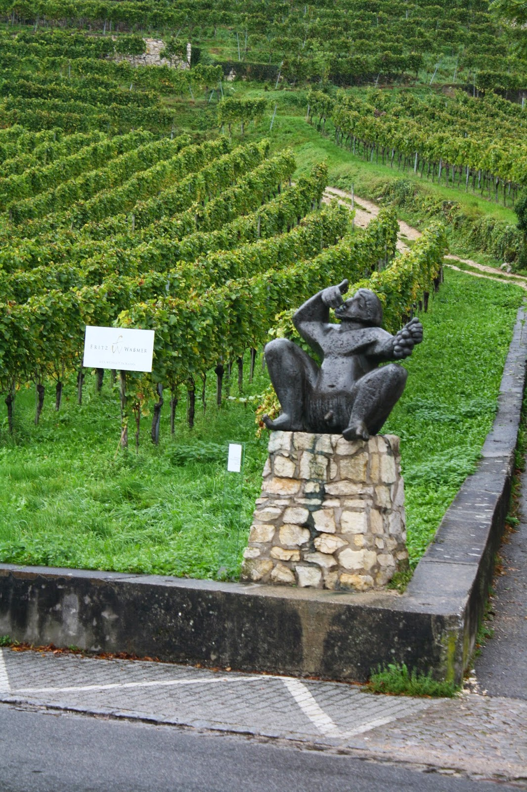 vineyard staufen germany lace up and walk