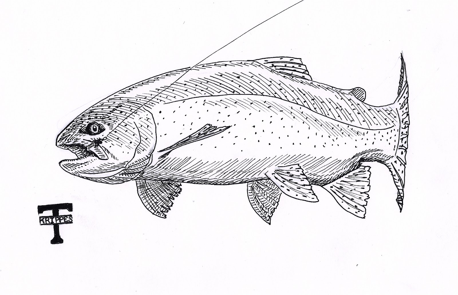 Line Drawing Rainbow : Free coloring pages of rainbow trout
