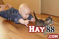 Ảnh hài bựa và hot facebook 14/11/2012