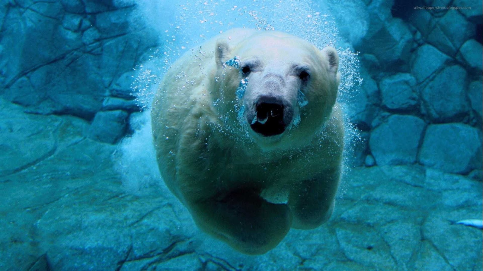 Polar Beer Running Under Water Funny Wallpapers New