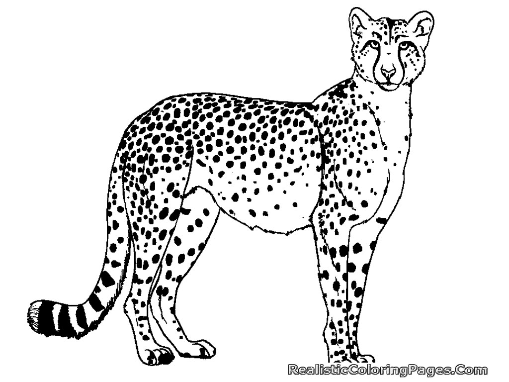 coloring pages cheetah - photo#10