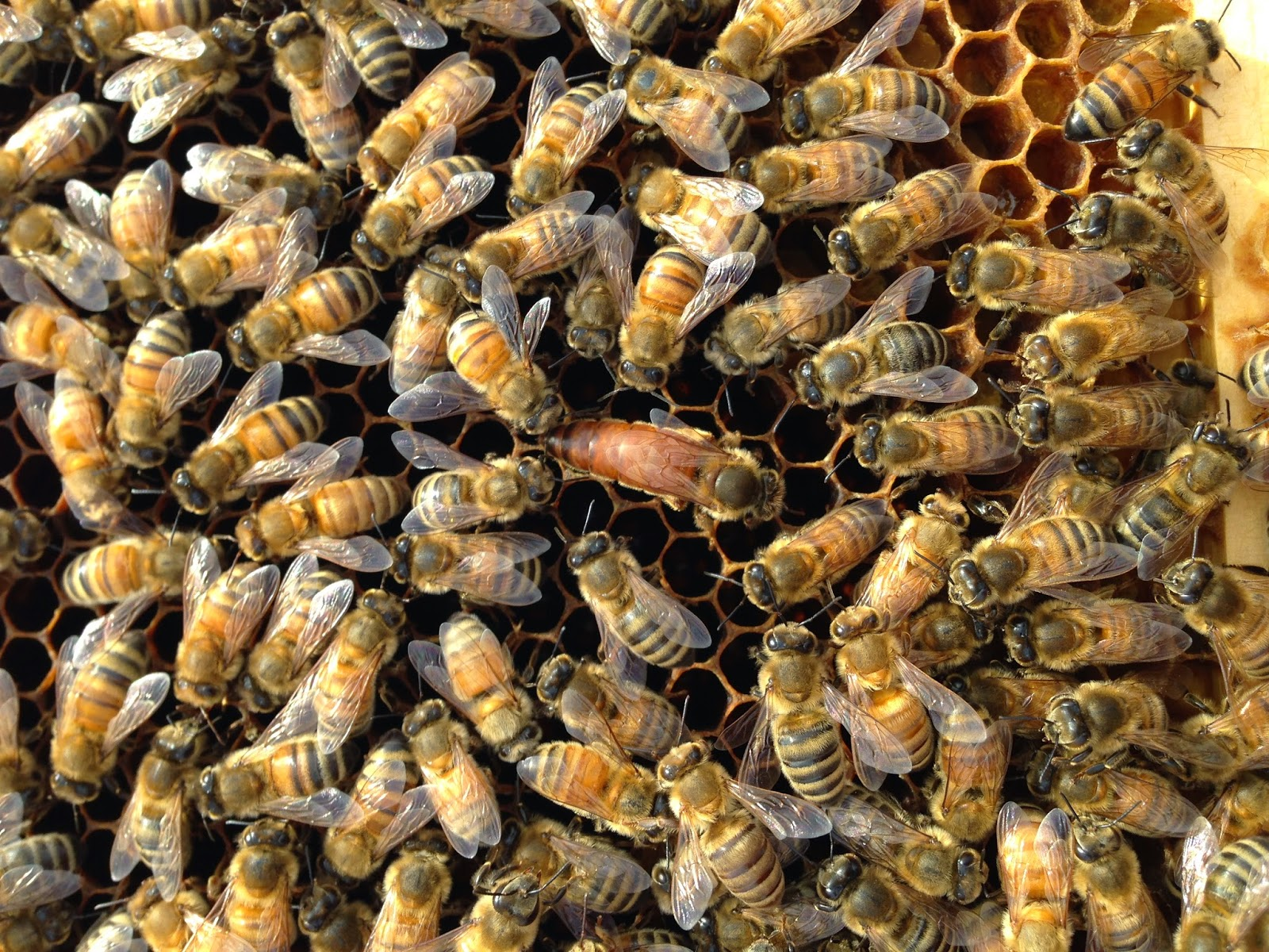 Beekeeping methods: a selection of sites