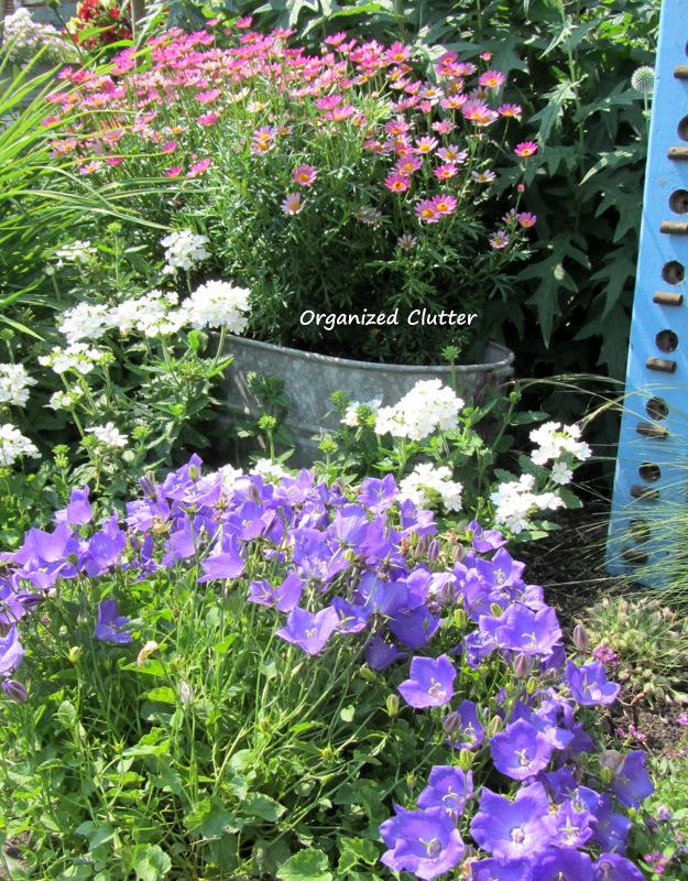 The Front Flower Border www.organizedclutterqueen.blogspot.com