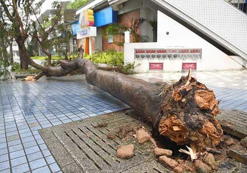 沖縄本島を襲った台風9号の爪痕