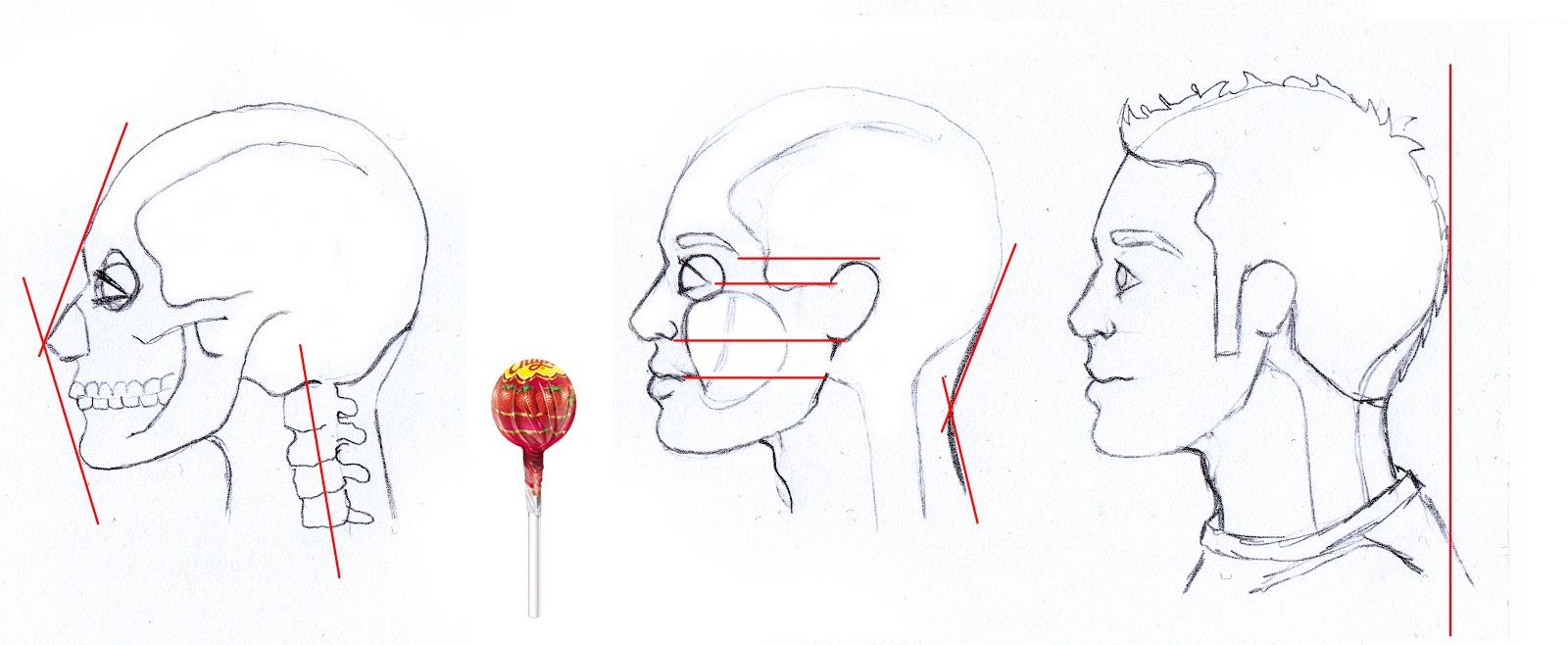 No soy una cebolla: Anatomía cara