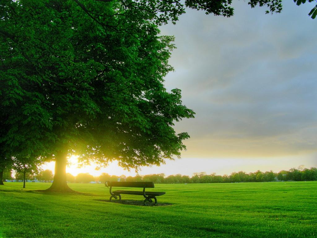 hijau keindahan