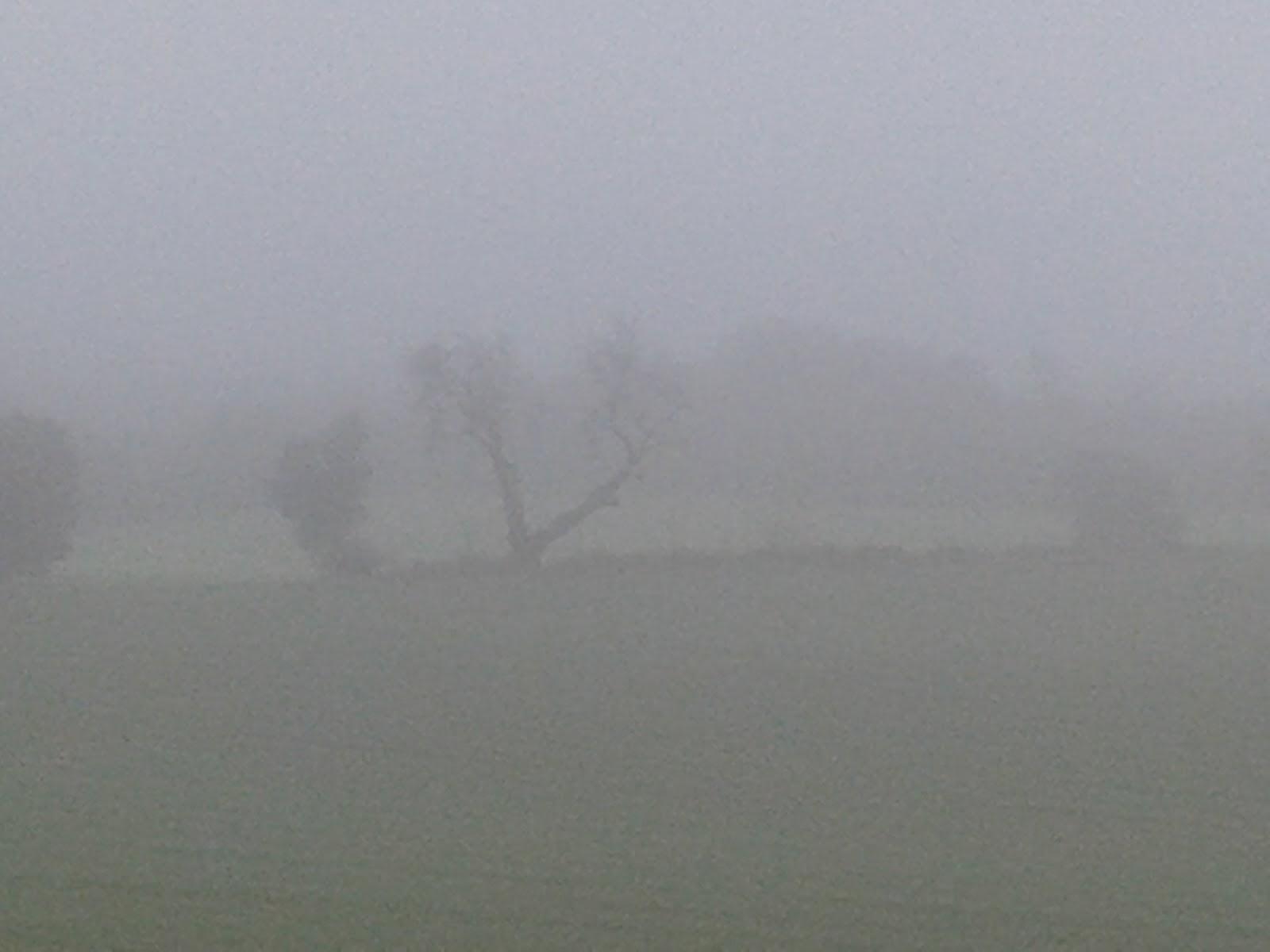 Niebla camino del Pueyo