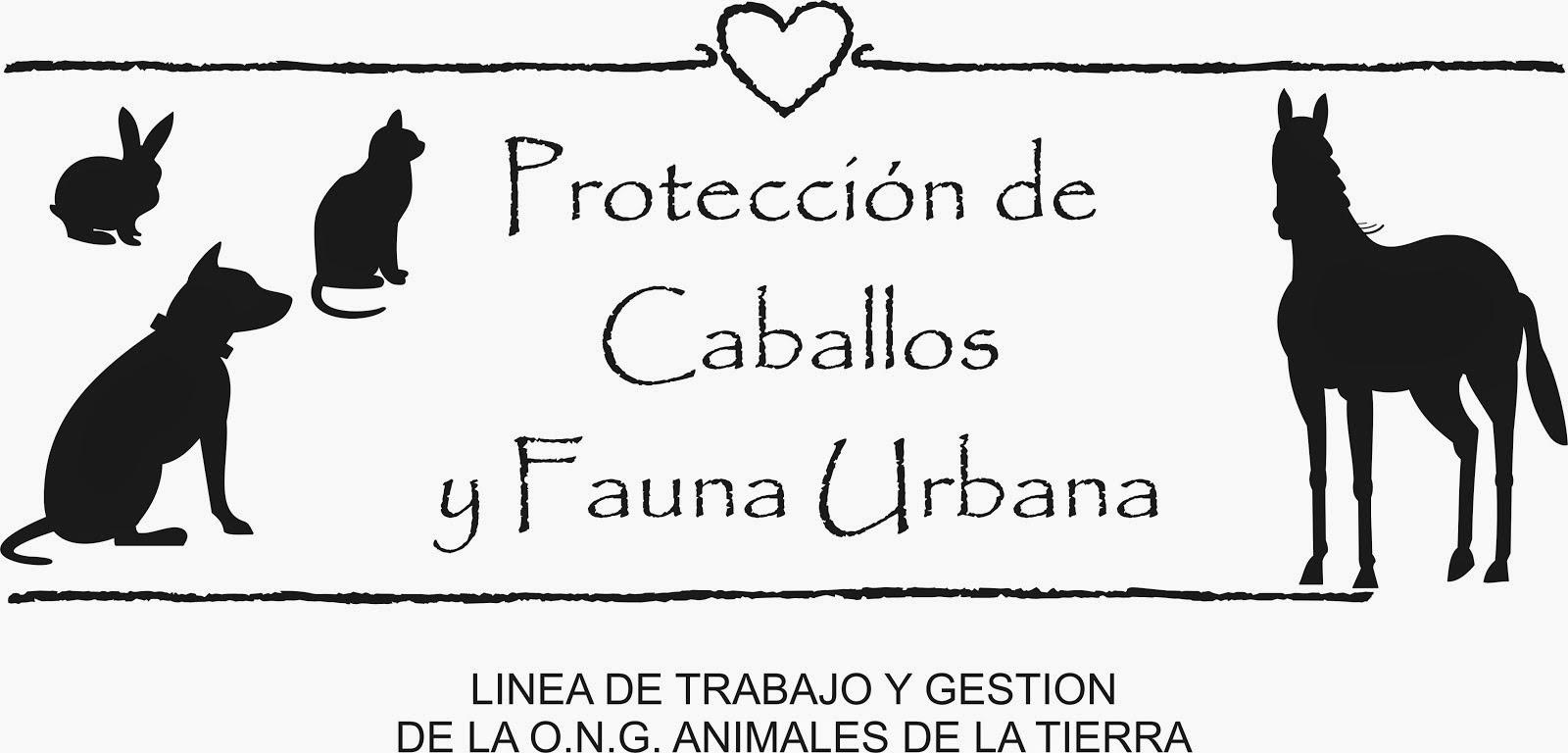PROTECCION de FAUNA URBANA