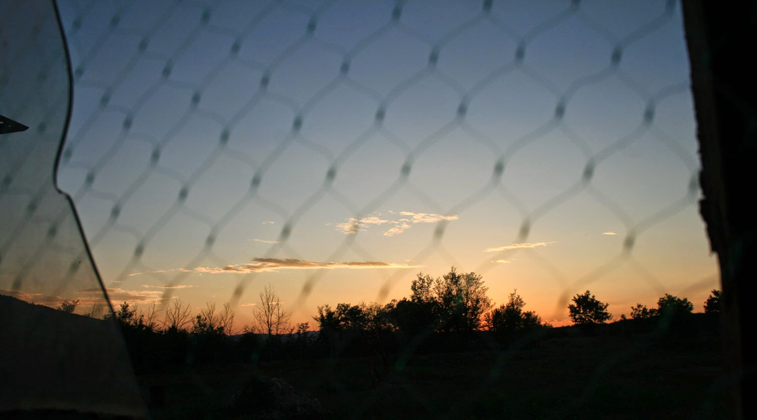 Sunset through bird netting