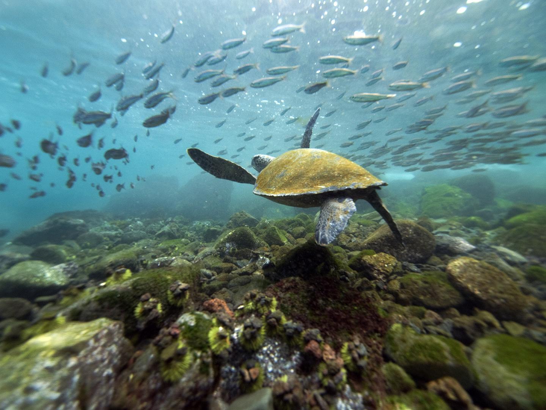 Galapagos Ecuador  city photos gallery : Phoebettmh Travel: Ecuador – Galápagos wildlife spotting: why you ...