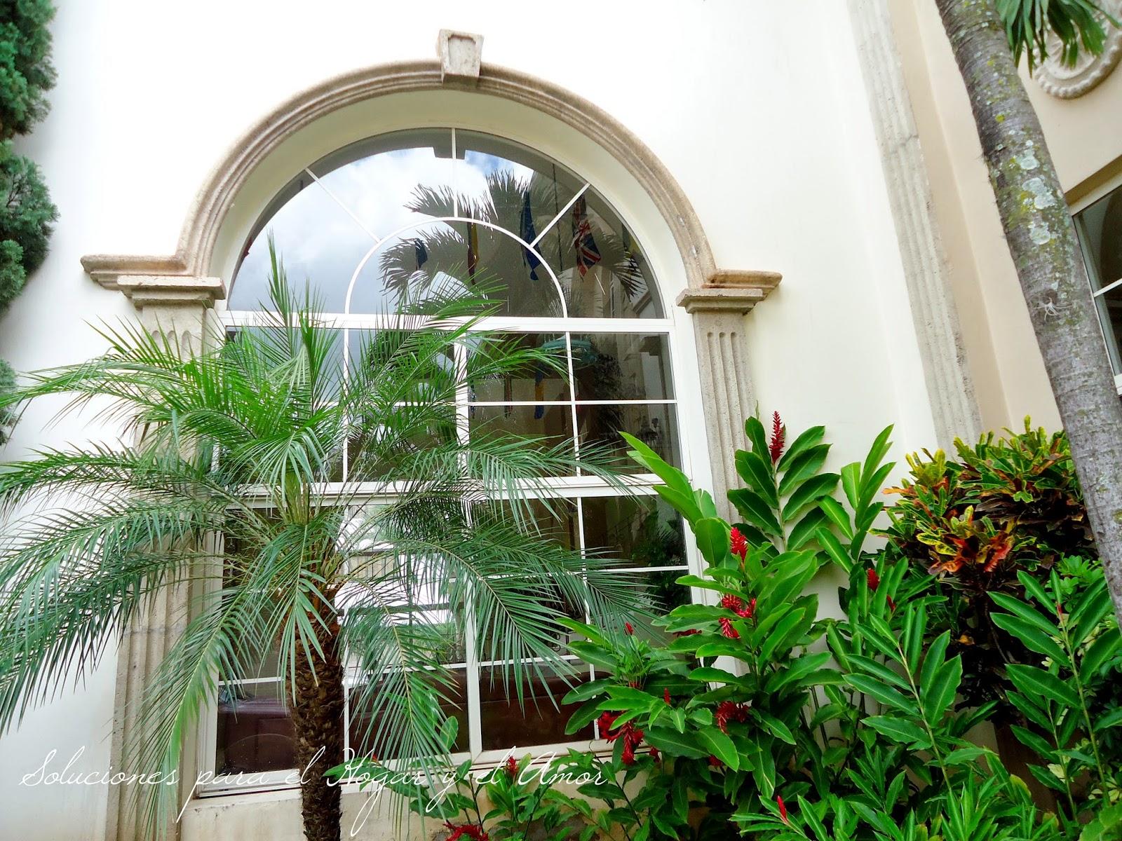 ventana grande, palmera, plantas