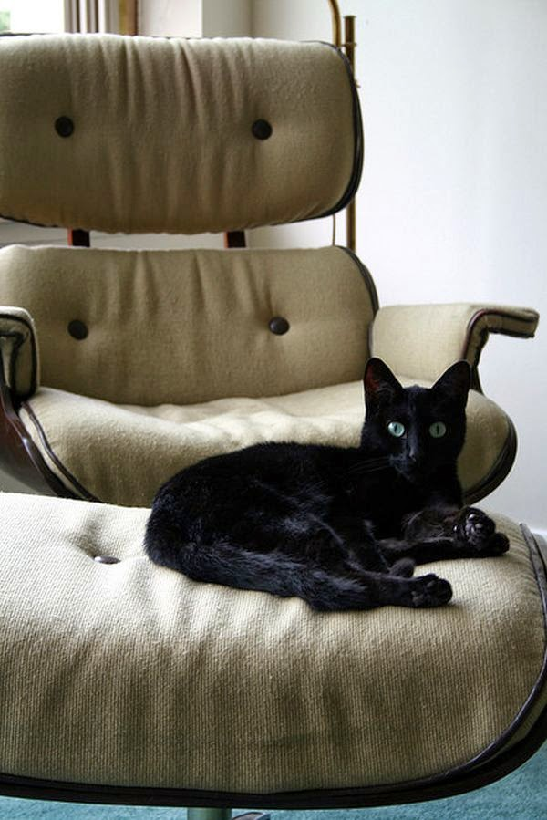 black cat on an Eames Lounge Chair