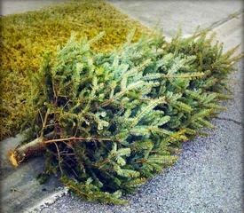 Christmas is Over, Get Your Tree to the Curb
