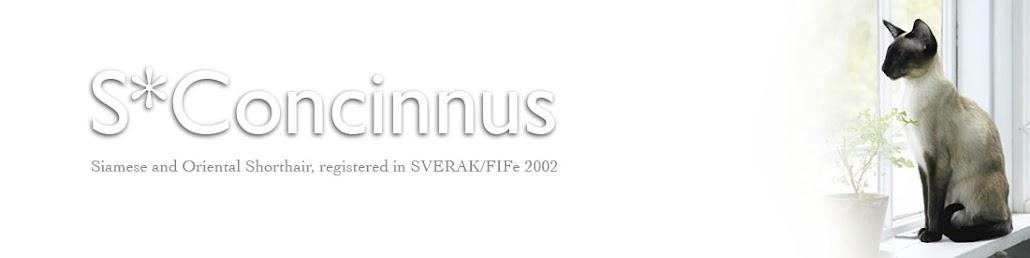 S*Concinnus